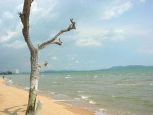 Пляж возле комплекса
