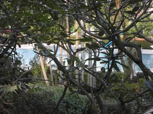 Condo Balkon Pool Ausblick