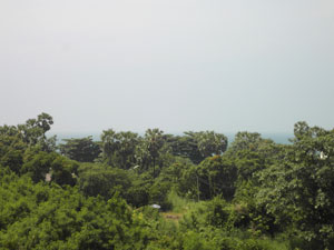 Paradise Condo View